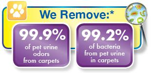 healthy pet urine removal treatment