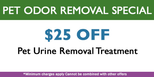 pet odor removal special