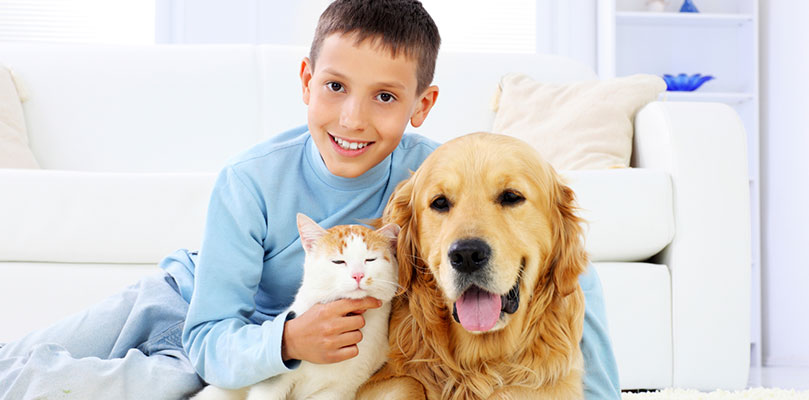 family safe pet urine removal treatment